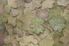 Rocznika herbarium zdjęcia royalty free