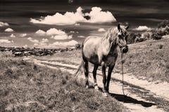 Rocznika konia krajobraz Obrazy Royalty Free