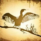 Rocznika kormoran Zdjęcie Royalty Free