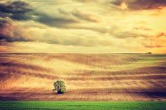 Rocznika krajobraz z osamotnionym drzewem Obrazy Stock