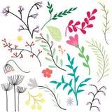 Rocznika kwiatu set Zdjęcie Royalty Free