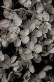 Rocznika kwiatu starzy tła - rocznika skutka stylu obrazki Obrazy Stock