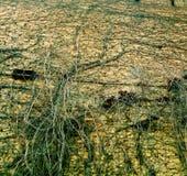 Rocznika lekki ściana z cegieł Splatający z winogronami Zdjęcie Stock