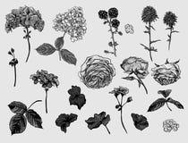 Rocznika monochromatyczny kwiecisty set naturalni elementy Obrazy Royalty Free