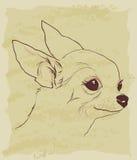 Rocznika nakreślenie śliczny chihuahua pies Fotografia Royalty Free