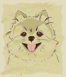 Rocznika nakreślenie śliczny spitz pies ilustracja wektor
