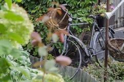 Rocznika ogrodowy bicykl Obraz Stock