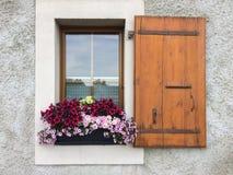 Rocznika okno z menchiami i czerwoną piękną petunią kwitnie Zdjęcia Royalty Free