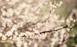 Rocznika okwitnięcia drzewny kwiat zdjęcie stock