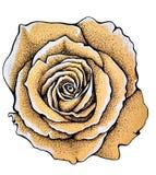 Rocznika papieru róży stary nakreślenie Zdjęcie Royalty Free