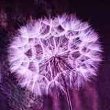 Rocznika Pastelowy tło - żywy abstrakcjonistyczny dandelion kwiat Zdjęcie Stock