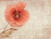 Rocznika pocztówkowy szablon z makowym kwiatem na podławym papierze Obrazy Stock