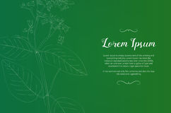 Rocznika projekta szablon z zieloną rośliną Obrazy Stock