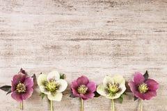 Rocznika ramowy tło z wiosną kwitnie w pastelowym kolorze Zdjęcia Stock