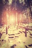 Rocznika stylizowany zmierzch w tajemniczym lesie Obrazy Stock