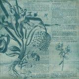 Rocznika tła kolażu papier Horticulture kolażu Digital papier - Botaniczna ilustracja - royalty ilustracja