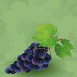 Rocznika tło z czarnym winogronem Zdjęcia Royalty Free