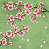 Rocznika tło z Japońskim czereśniowego drzewa sakur royalty ilustracja