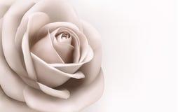 Rocznika tło z piękną menchii różą. Vec ilustracji