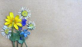 Rocznika tło z suchymi herbarium roślinami Obraz Royalty Free