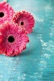 Rocznika tło od gerbera stokrotki kwitnie na drewnianym turkusowym tle dla matki lub kobiety dnia Zdjęcia Royalty Free