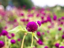 Rocznika t?o troch? kwitnie, natura pi?kna, tonuj?cy projekt wiosny natur? zdjęcie royalty free