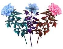 ROCZNIKA TRZY róże Zdjęcia Stock
