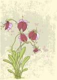 Czerwone orchidee ilustracja wektor