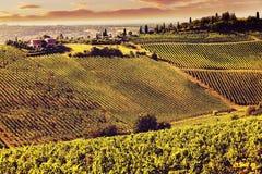 Rocznika widoku wzgórza Tuscany z winnicą Zdjęcie Royalty Free