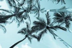 Rocznika wizerunku palmy fotografia stock