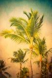 Roczniki Textured drzewka palmowe fotografia stock