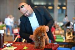 ROCZNY jawny międzynarodowy psi przedstawienie genua WŁOCHY, MAJ - 21 2016 - Obraz Stock