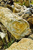 Roczny rings Zdjęcie Stock