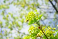 Roczny wiosny odnowienie natura fotografia stock