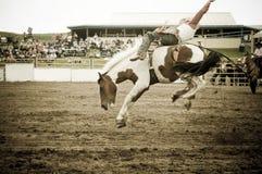 Rodéo et cowboys photo libre de droits