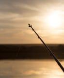 Rod na jeziorze przy zmierzchem Zdjęcia Stock