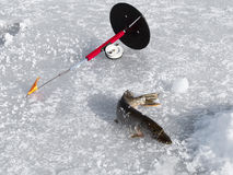 Rod and pike on winter fishing Stock Image