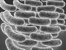Rod shaped bacteria. A 3d illustration of rod shaped bacteria closely similar to e. coli Royalty Free Stock Photo