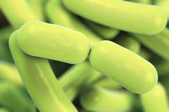 Rod shaped bacteria Royalty Free Stock Image
