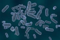 Rod shaped bacteria Royalty Free Stock Photos