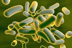 Rod shaped bacteria Stock Photo