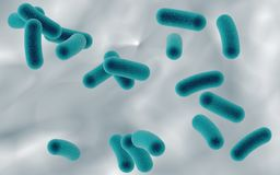 Rod shaped bacteria Stock Images