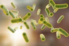 Rod shaped bacteria Stock Image