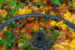 Roda de bicicleta nas folhas de outono, roda de bicicleta nas folhas de outono, nas folhas coloridas e no uso da bicicleta Fotografia de Stock