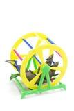 Roda do exercício do animal de estimação Foto de Stock Royalty Free