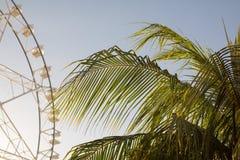 Roda e palmeira de Ferris imagem de stock