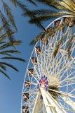 Roda e palmeiras de Ferris Foto de Stock Royalty Free