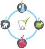Roda saudável das recomendações dos dentes ilustração do vetor