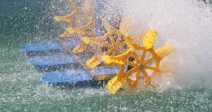 Rodas da cultura aquática filme