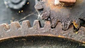 Rodas denteadas gordurosas da engrenagem Foto de Stock